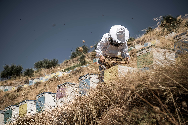 man-hillside-honeycomb
