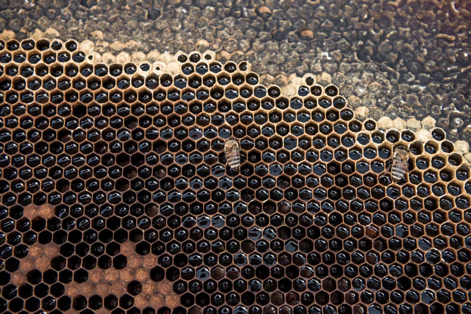 honeycomb-up-close