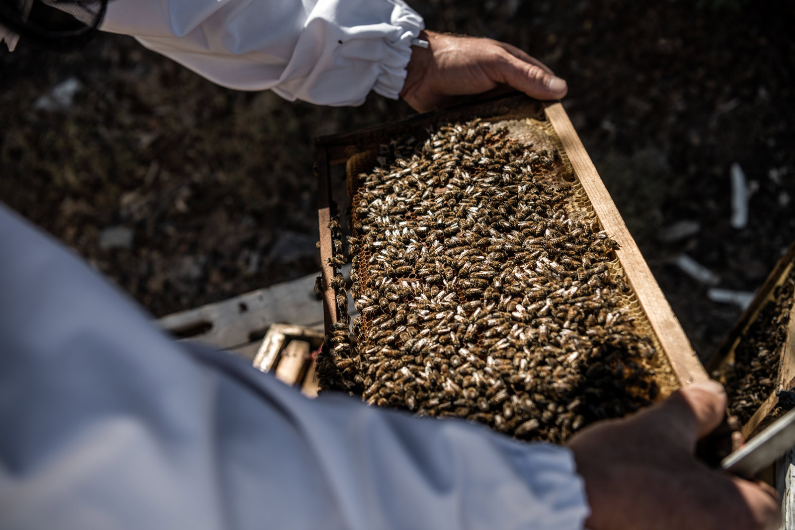 man-holds-honeycomb